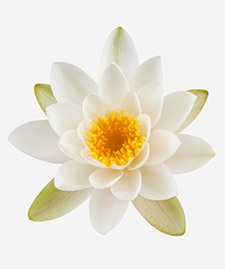 My Fifth Avenue Middle Notes: Lotus Flower