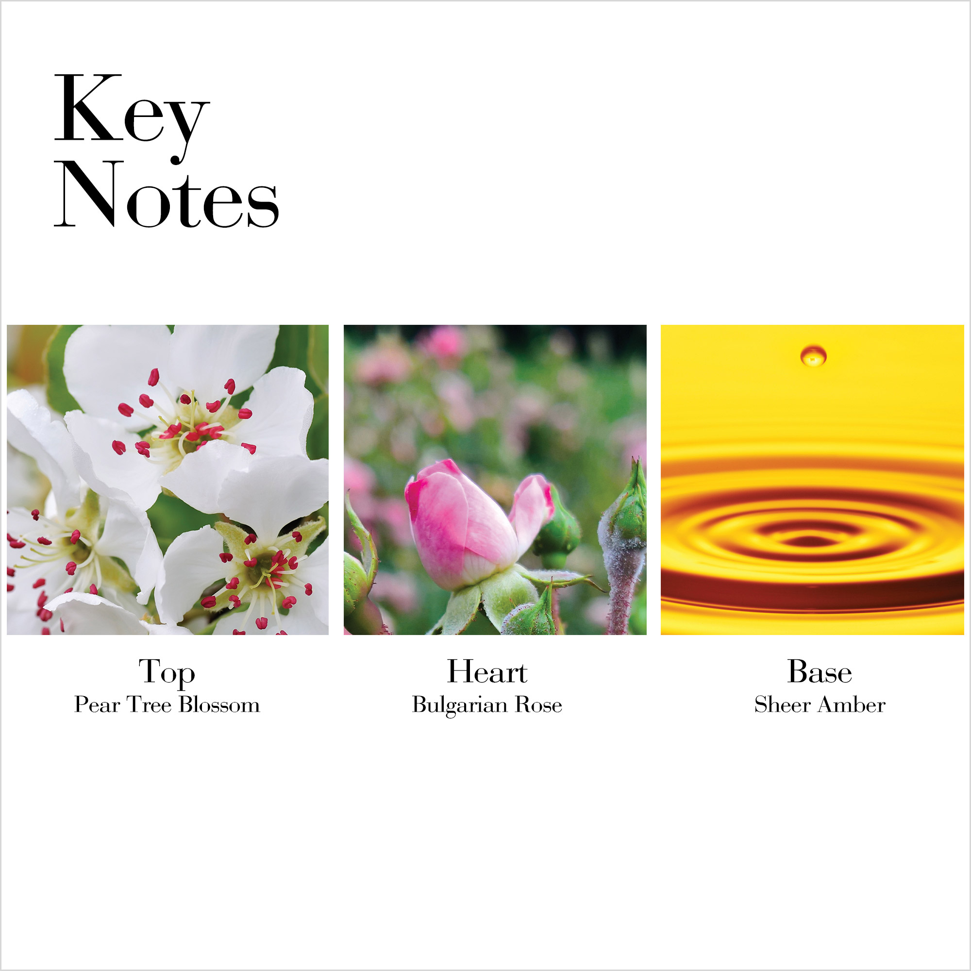Key Notes- Top Pear Tree Blossom, Heart Bulgarian Rose, Base Sheer Amber