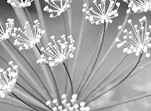Botanical Glassword Extract