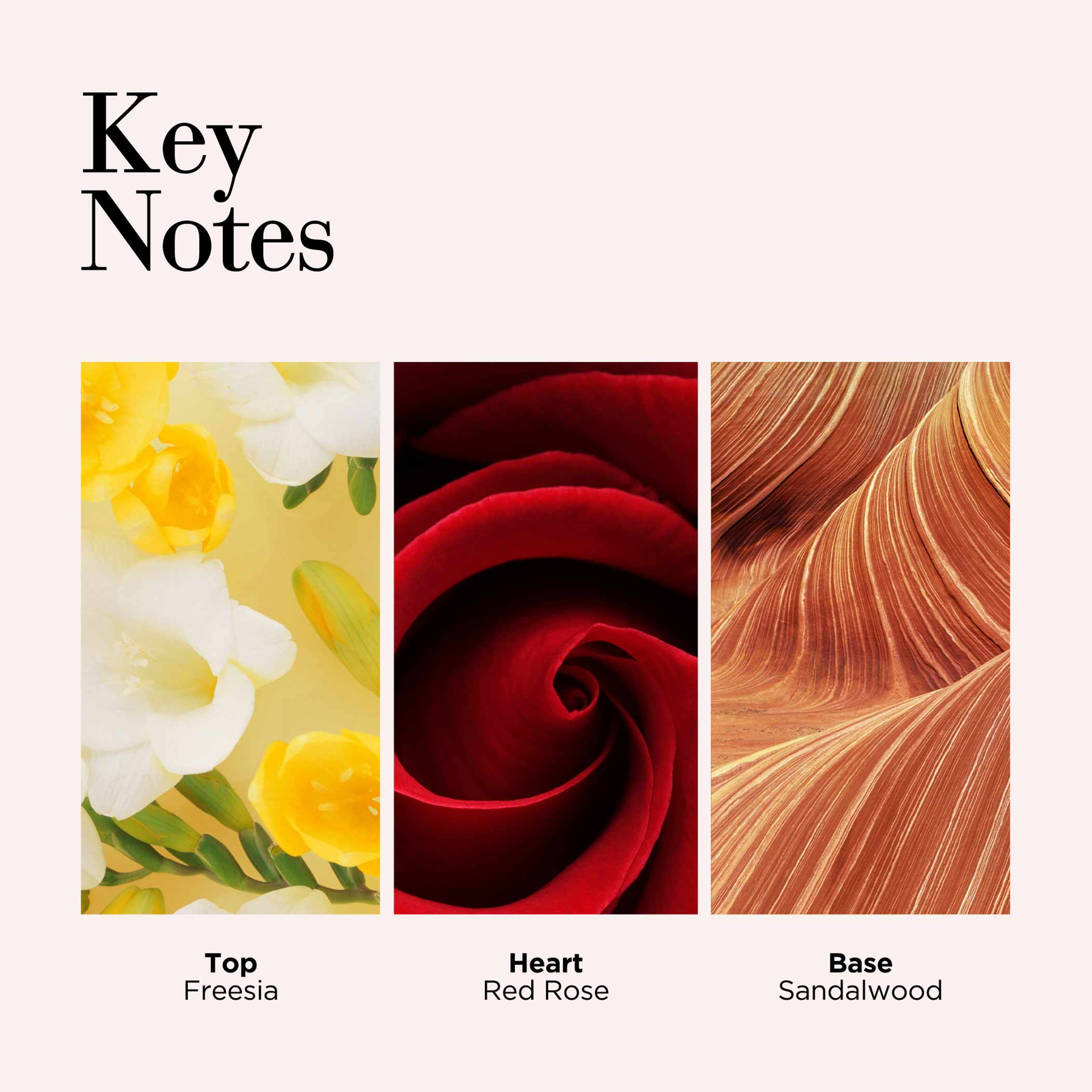 Key Notes, Top Freesia, Mid Red Rose, Base Sandalwood