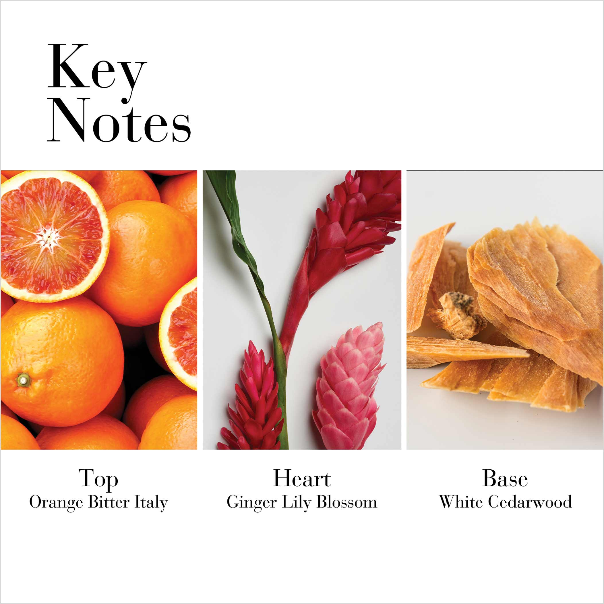 Key Notes- Orange Bitter Italy, Ginger Lily Blossom, White Cedarwood