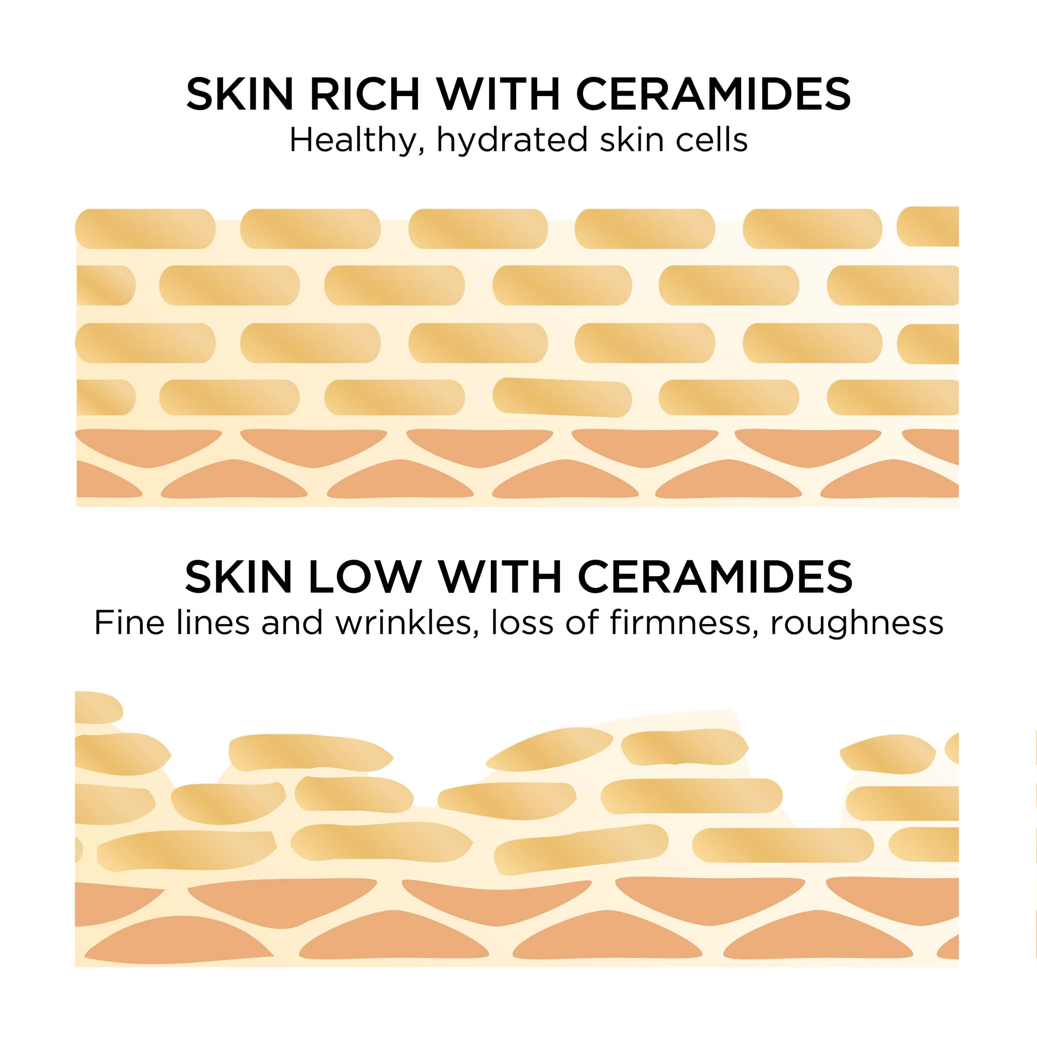 Skin rich with ceramides are healthy, hydrated skin cells vs skin low with ceramides have fine lines and wrinkles, loss of firmness and roughness