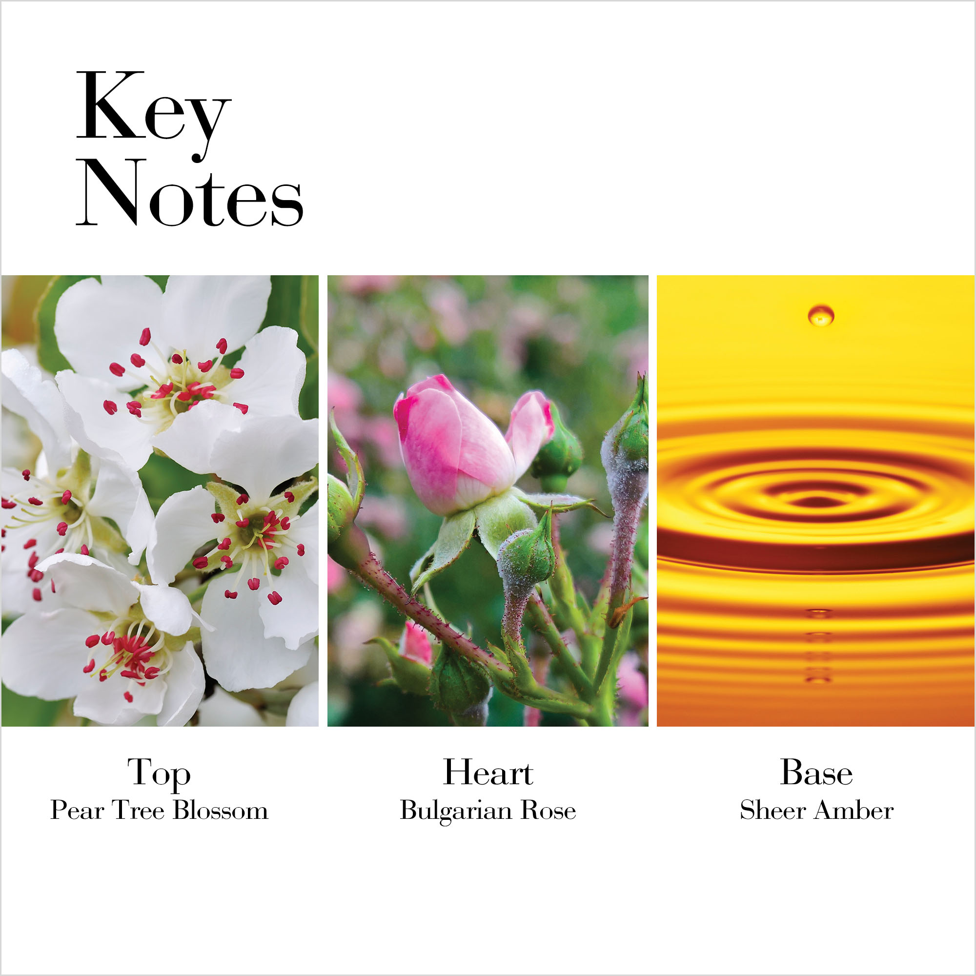 Key Notes: Top Pear Tree Blossom, Heart Bulgarian Rose, Base Sheer Amber