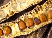 Carob Seed Extract