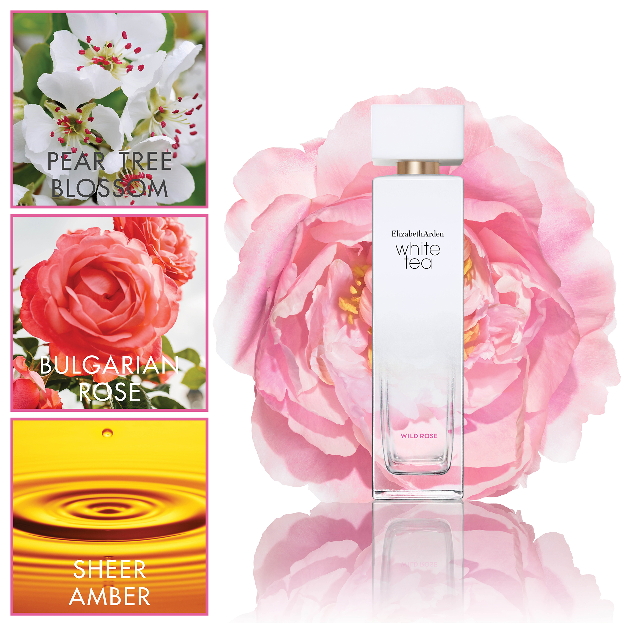 White Tea Wild Rose - Pear Tree Blossom, Bulgarian Rose, Sheer Amber