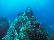 Deep Sea Organism Ferment