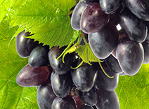 Cabernet Grapeseed Extract